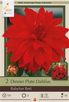 Dahlia Decorative Dinner Plate 'Babylon Red'