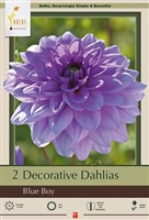 Dahlia Decorative Dinner Plate 'Blue Boy'