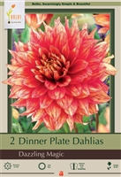 Dahlia Decorative Dinner Plate 'Dazzling Magic'