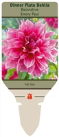 Dahlia Decorative Dinner Plate 'Emory Paul'