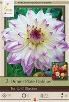 Dahlia Decorative Dinner Plate 'Ferncliff Illusion'