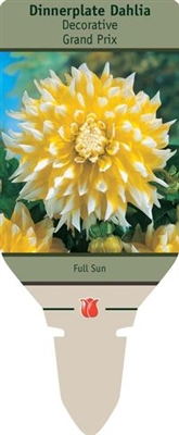 Dahlia Decorative Dinner Plate 'Grand Prix'