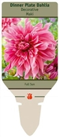 Dahlia Decorative Dinner Plate 'Maki'