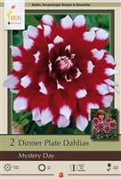 Dahlia Decorative Dinner Plate 'Mystery Day'