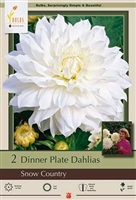 Dahlia Decorative Dinner Plate 'Snow Country'