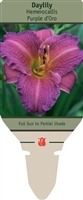 Daylily Hemerocallis 'Purple d'Oro'