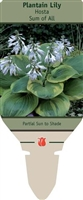 Hosta Plantain Lily 'Sum of All'