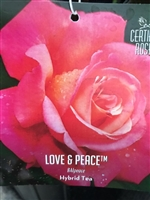 Love & Peace Hybrid Tea Rose