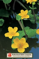 Marsh Marigold Caltha palustris
