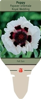 Poppy Papaver orientale 'Royal Wedding'