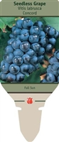 Seedless Grape Vitis labrusca 'Concord'