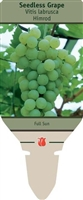 Seedless Grape Vitis labrusca 'Himrod'