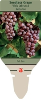 Seedless Grape Vitis labrusca 'Reliance'