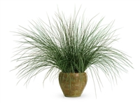 Graceful Grasses® Blue Mohawk® Soft Rush Juncus inflexus