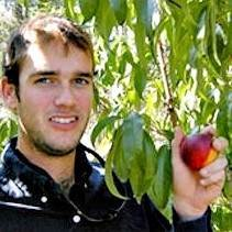 Harvester Peach Tree