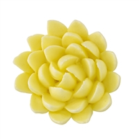 Chrysanthemum - Med-Lg - Yellow