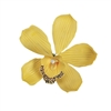 Medium Yellow Australian Cymbidium Orchid