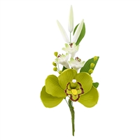 Australian Cymbidium Hyacinth Spray - Apple Green