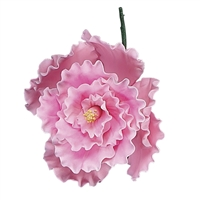 Chinese Double Rose - Pink