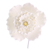 Chinese Double Rose - White