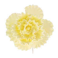 Chinese Double Rose - Yellow