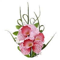 Cymbidium Orchid Spray - Light And Dark Pink