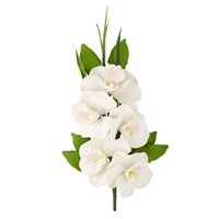 Cymbidium Orchid Spray -White - 5 Blossoms