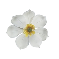 Gum Paste Medium Magnolia - White With Yellow And Green Center