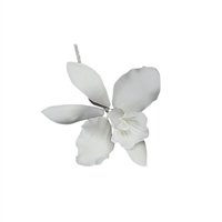 Medium Cattleya Orchid - White
