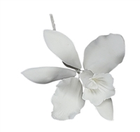 Large Cattleya Orchid - White