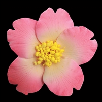 Medium Gum Paste Camellia Blossom - Pink With Yellow Stamens
