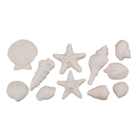 Gum Paste Sea Shells Assortment - Brown Tint