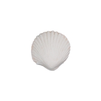 Med-Lg Gum Paste Sea Shells