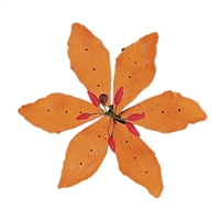 Gum Paste Tiger Lily - Orange