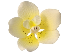 Gum Paste Vanda Orchid - Yellow