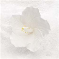 Royal Icing Hibiscus - white