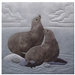 Quilt block of two seals frolicking.