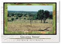 Grazing Sheep - Standard Postcard  AOB-041