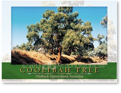 Coolibah Tree - Standard Postcard  AOB-051
