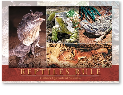 Reptiles Rule - Large Postcard  AOBL-003