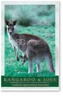 Kangaroo & Joey - Small Magnets  AOBM-001