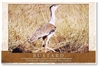 Bustard - Small Magnets  AOBM-053