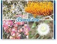 Wildflowers around Barcaldine - Standard Postcard  BAR-015