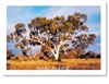 Barcaldine Outback Queensland - DISCOUNTED Standard Postcard  BAR-224