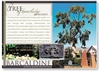 Tree of Knowledge - DISCOUNTED Standard Postcard  BAR-232
