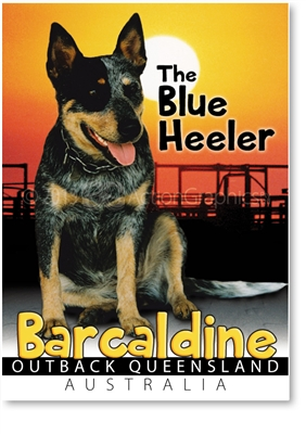 The Blue Heeler - Small Magnets  BARM-009