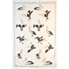 PELICANS Cotton/Linen Tea Towel - BC412