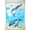 AUSTRALIAN WHALES Cotton/Linen Tea Towel - C015