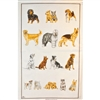 DOGS Cotton/Linen Tea Towel - C704