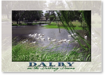 Geese on the Myall Creek. - Standard Postcard  DAL-190